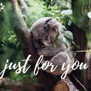 Just for You Koala eCard Gift Donation